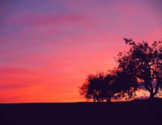 Clear your Mind - Sunset and tree